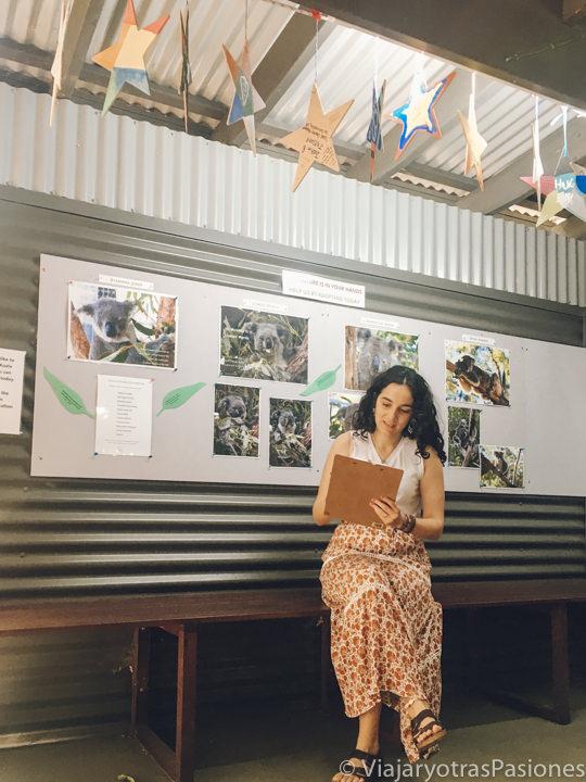Rellenando los papeles de nuestro ahijado de un koala en Port Macquarie
