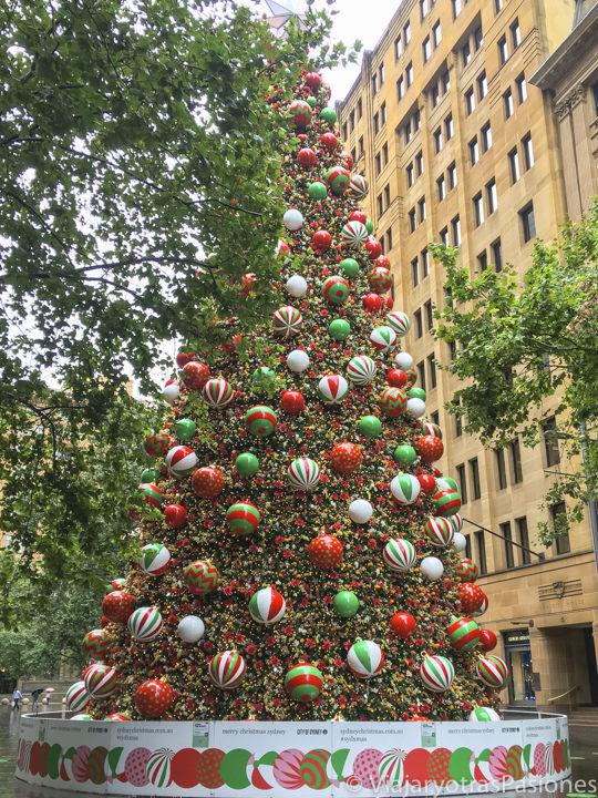 Imagen de un típico árbol de navidad australiano en el centro de Sydney
