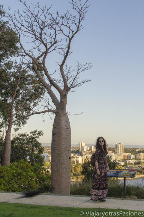 Frente a un árbol de boab en el Kings Park de Perth en Western Australia