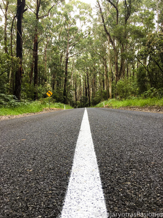 Bosque que se puede encontrar en recorrer la Great Ocean Road en Australia, cerca de Cape Otway