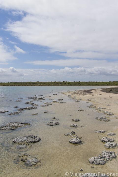 Antiguos stromalotitas cerca de Cervantes y los Pinnacles desert en el viaje a Perth y Western Australia