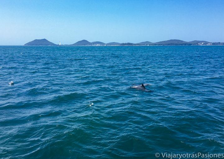Panorama desde el barco para el crucero de los delfines en Port Stephens