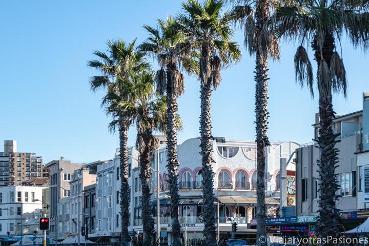 Panorama de la bonitas palmeras en la Campbell Parade en Bondi Beach, Sydney