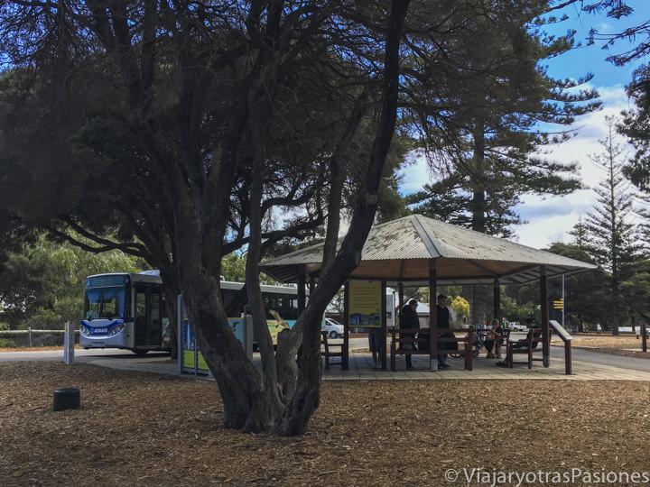 Parada del bus para visitar Rottnest Island cerca de Perth y Freemantle
