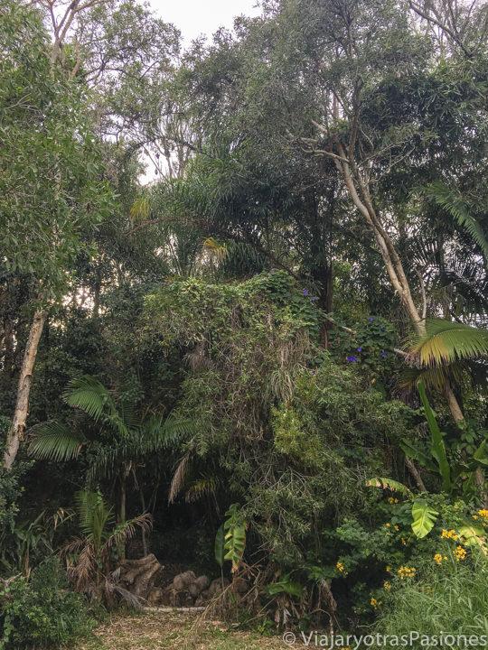 Panorama de selva tropical en el centro de Byron Bay, Australia