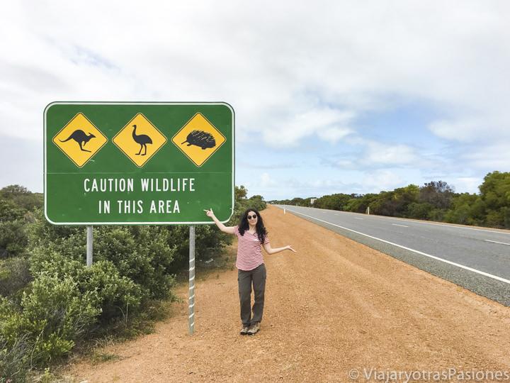 Imagen de peligro por los animales en una carretera australiana