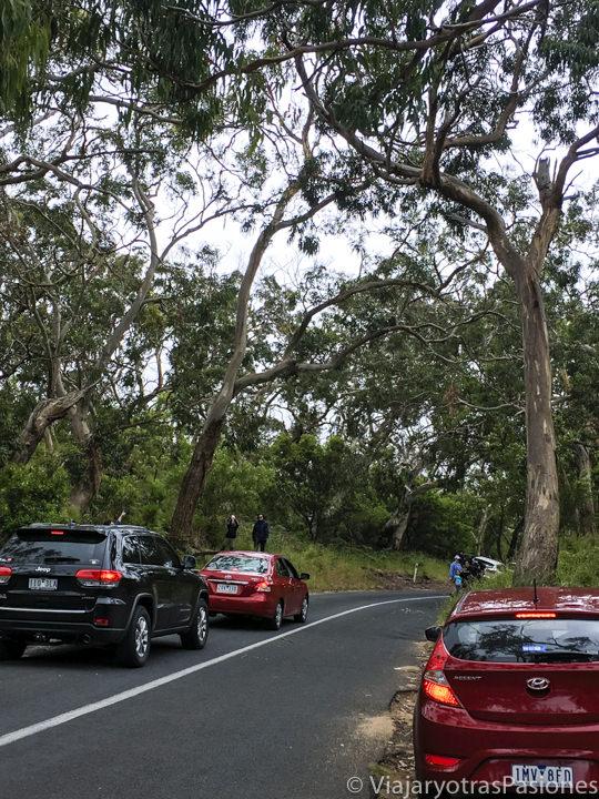 Coches parados para mirar koalas en recorrer la Great Ocean Road cerca de Cape Otway en Australia
