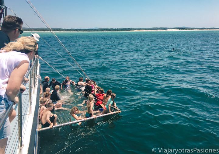 Malla para ver de cerca los delfines en el crucero desde Nelson Bay, Australia