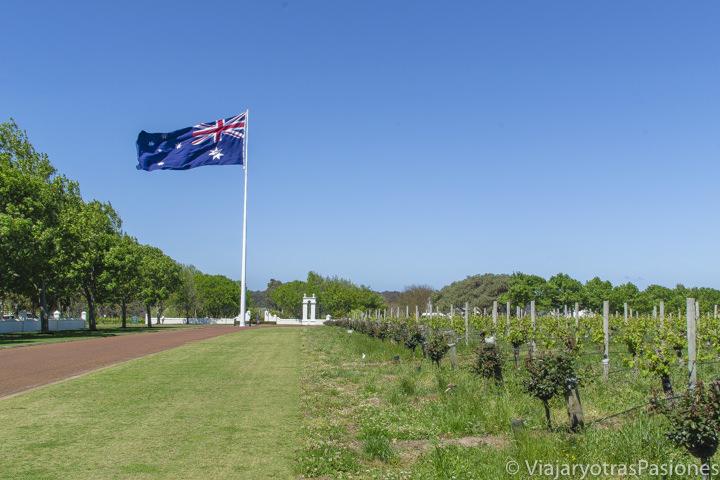 Panorama del famoso viñedo de la Voyager Estate en la Margaret River Region, Australia