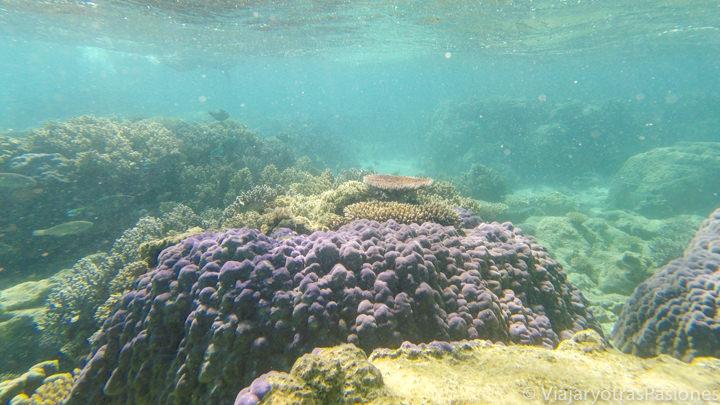 Imagen submarina del coral en Cape Tribulation, Australia